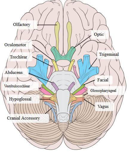 Effects of Acetyl-DL-Leucine on Cerebellar Ataxia (Study Protocol)